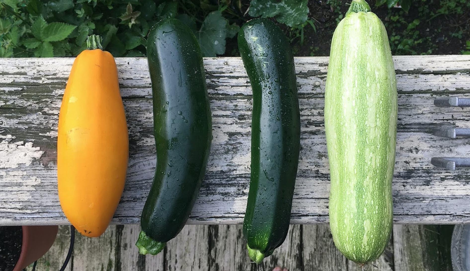zucchini-2611507_1920
