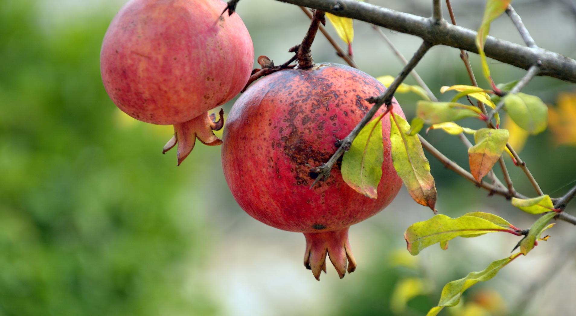pomegranate-3752112_1920